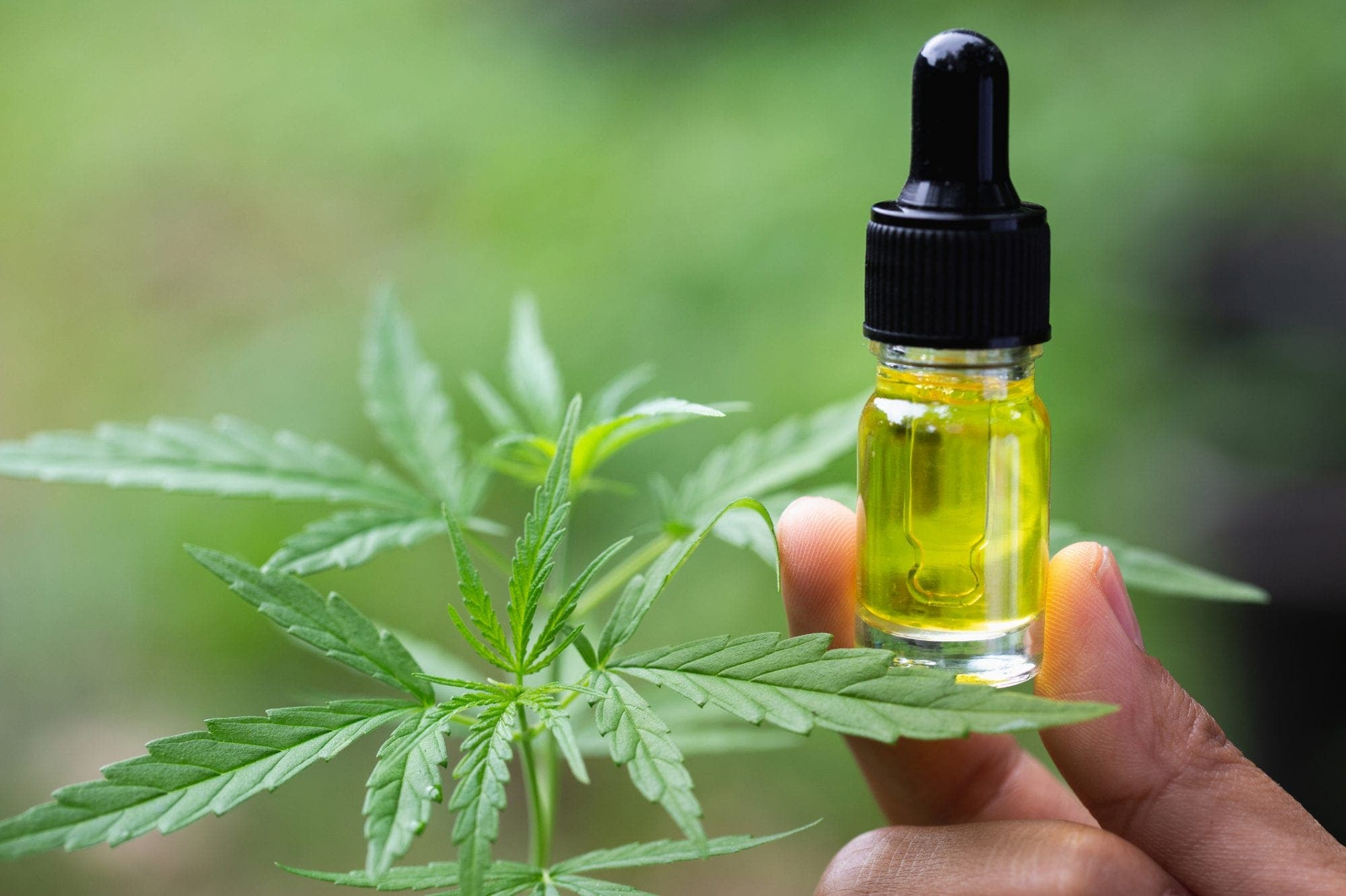 The Importance  of Using CBD Oil for Health Improvement